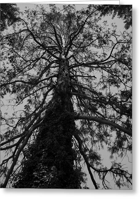 Gnarly Tree Greeting Card by Juergen Weiss