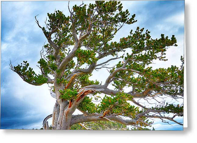 Gnarly Trees 2 Greeting Card