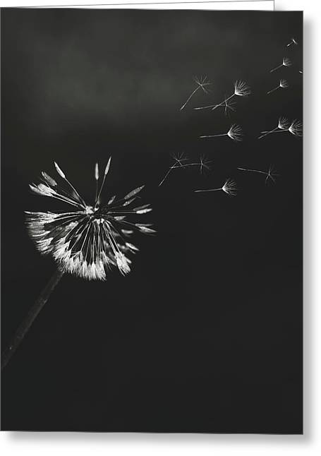 Go Forth Bw Greeting Card by Heather Applegate