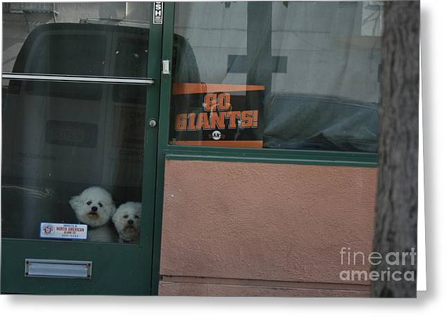 Greeting Card featuring the photograph Go Giants by Cynthia Marcopulos