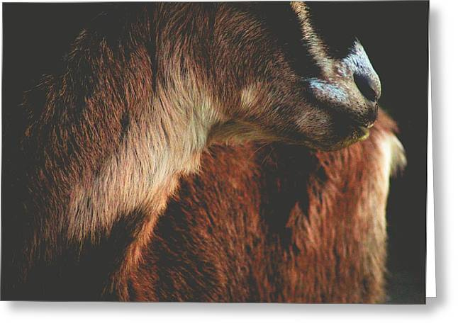 Goat Love Greeting Card