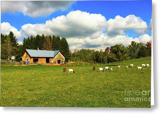 Goats Grazing Greeting Card by Anthony Djordjevic