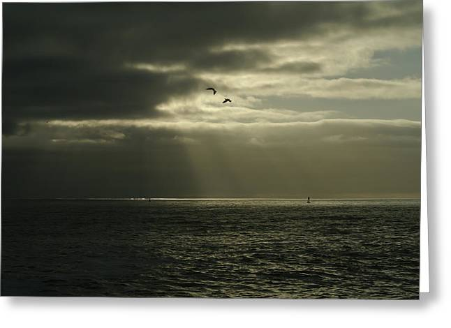 God's Gulls Greeting Card by Michael Courtney