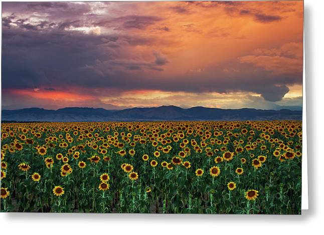 Greeting Card featuring the photograph God's Sunflower Sky by John De Bord