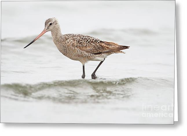 Godwit Playing In The Ocean Greeting Card