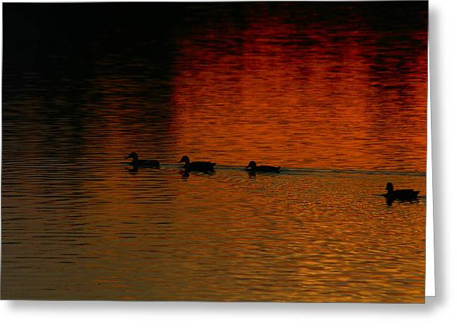 Going Home Greeting Card by T F McDonald