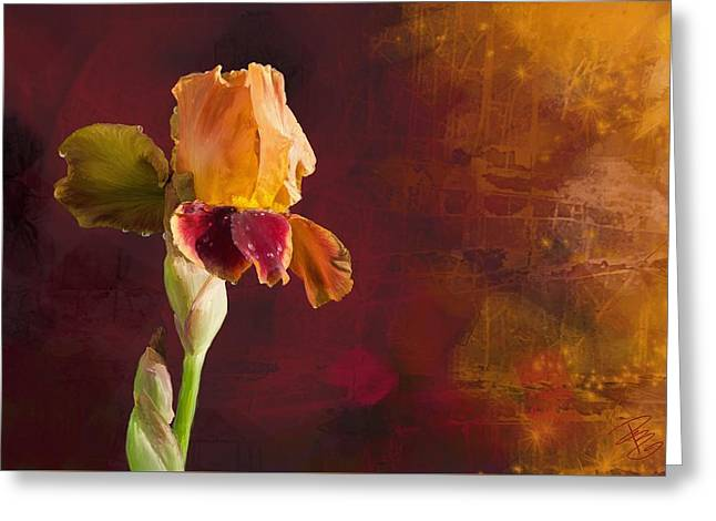 Gold And Red Iris Greeting Card by Debra Baldwin