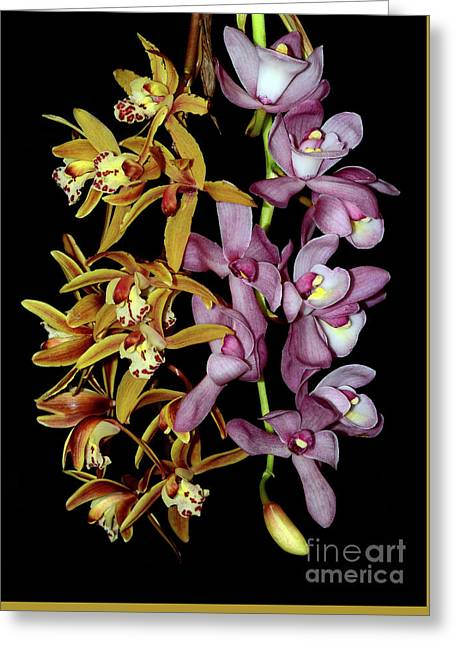 Greeting Card featuring the photograph Gold And Red Orchid Display By Kaye Menner by Kaye Menner