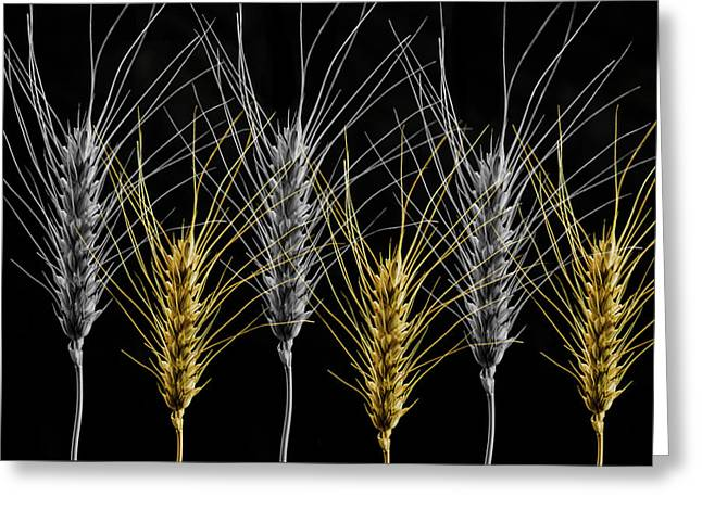 Gold And Silver Wheat Greeting Card