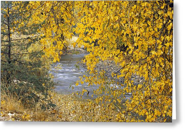 Gold And Yellow Greeting Card