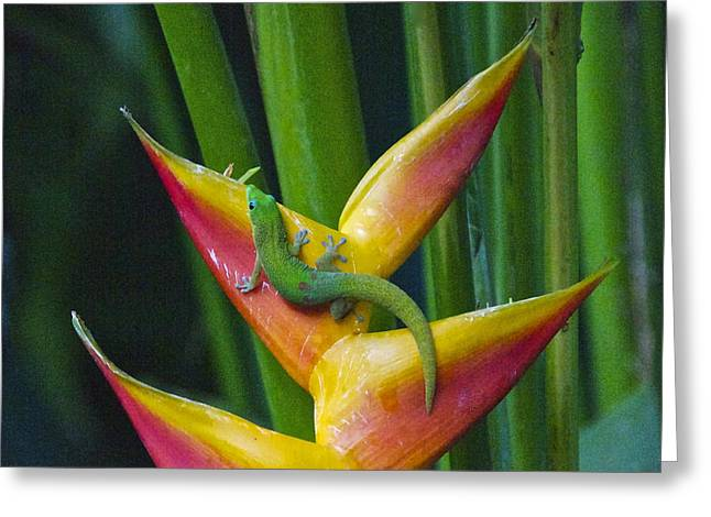 Gold Dust Day Gecko Greeting Card by Sean Griffin