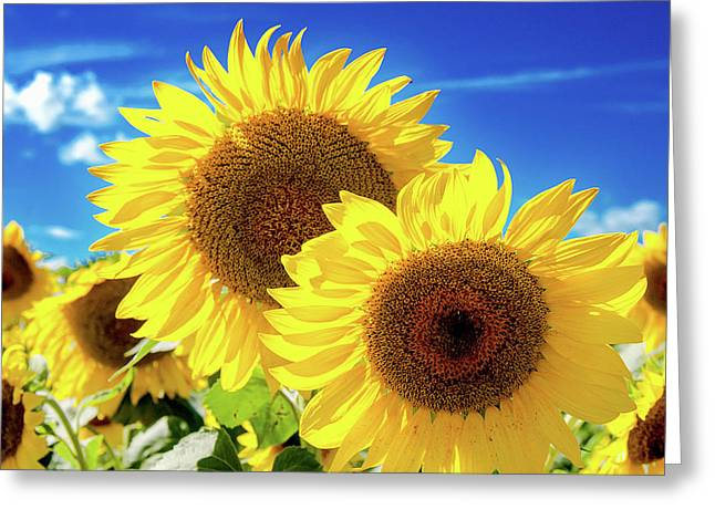 Gold Greeting Card by Greg Fortier