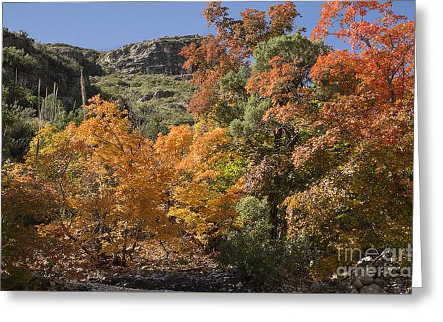 Gold In The Mountains Greeting Card by Melany Sarafis