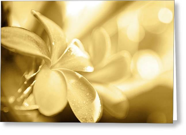 Gold Pastel Petals Greeting Card by Sean Davey