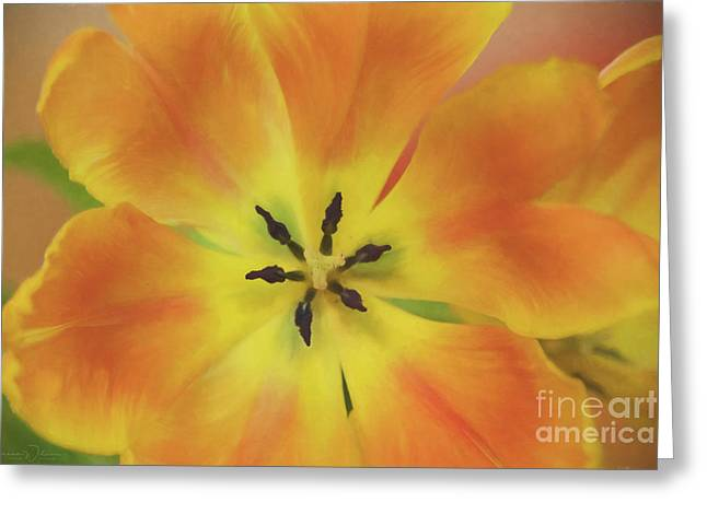 Gold Tulip Explosion Greeting Card