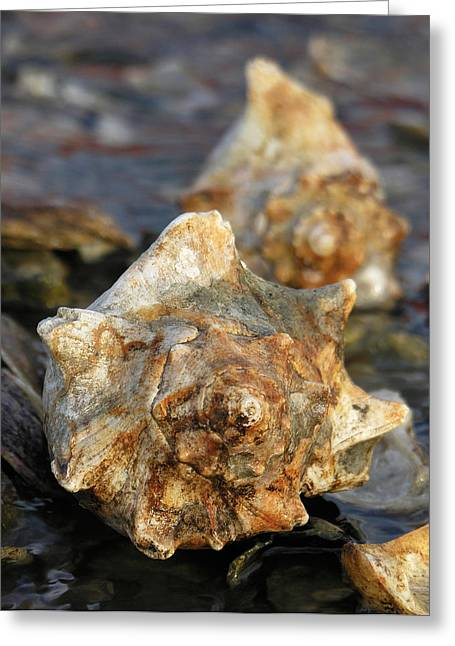 Gold Whelks On Oysters Greeting Card by Thomas Lovelace