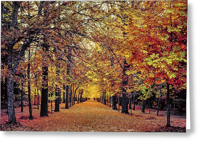Golden Alley In La Granja De San Ildefonso In Segovia, Spain Greeting Card by Hans Schrodter