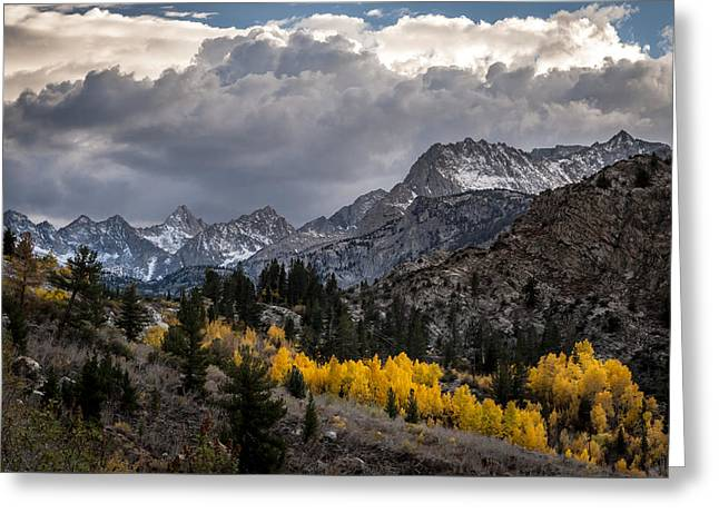 Golden Aspens And Snow Greeting Card