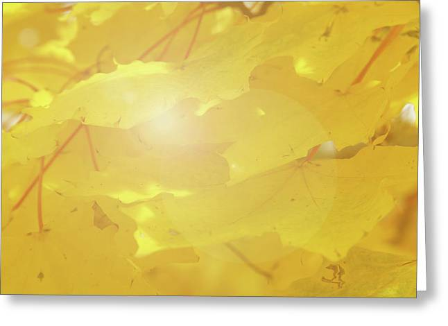 Golden Autumn Leaves Greeting Card