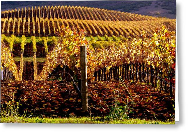 Golden Autumn Vineyard Greeting Card