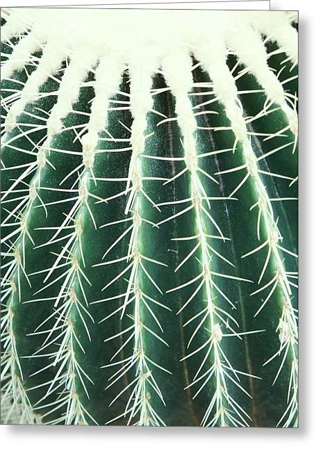 Golden Barrel Cactus Close Up Greeting Card by Art Spectrum