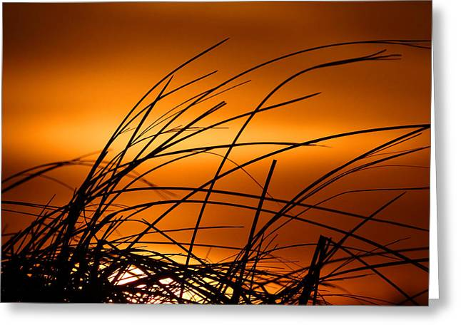 Golden Beach Dreams Greeting Card by Dianne Cowen