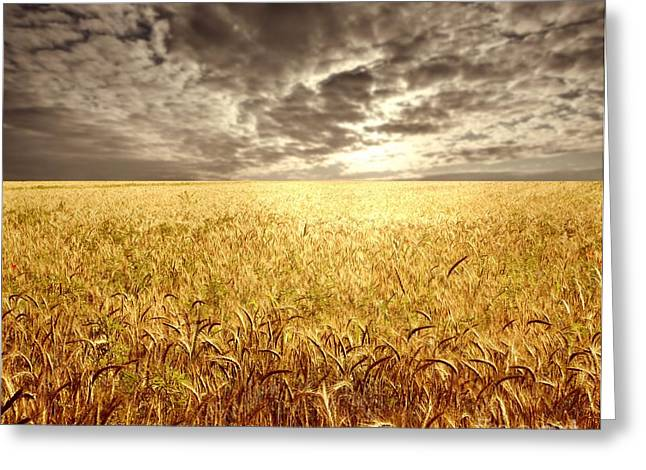 Golden Beautiful Wheat Farm Greeting Card