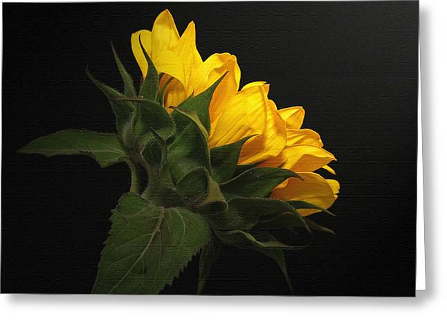 Greeting Card featuring the photograph Golden Beauty by Judy Vincent