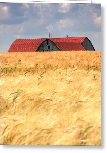 Golden Brown.... Greeting Card by Russell Styles