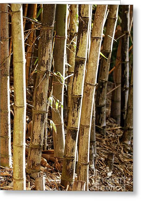 Greeting Card featuring the photograph Golden Canes by Linda Lees