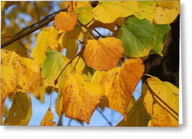 Autumn Art Greeting Cards - Golden Greeting Card by Carol Lynch