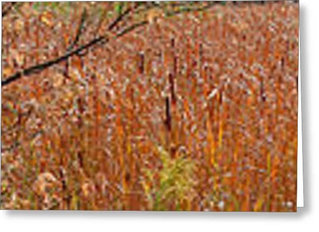 Golden Cattails Greeting Card