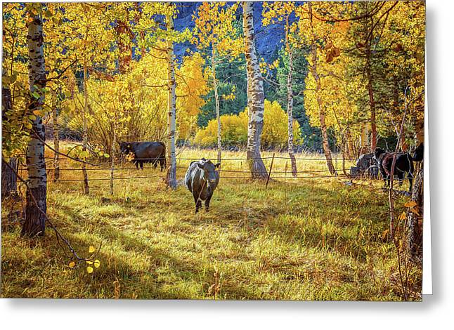Golden Cow Pasture Greeting Card by Lynn Bauer