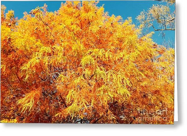 Golden Cypress  Greeting Card