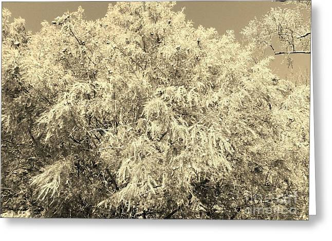 Golden Cypress - Sepia Greeting Card
