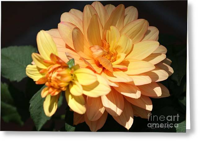 Golden Dahlia With Bud Greeting Card