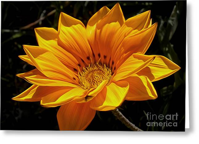 Golden Daisy Greeting Card