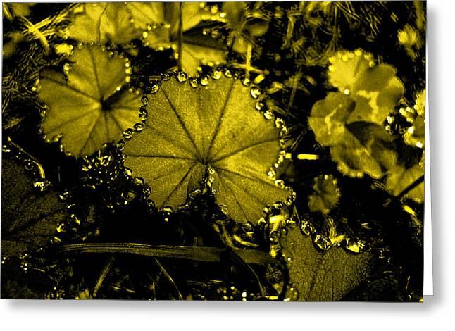 Golden Dew Greeting Card