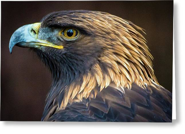 Golden Eagle 2 Greeting Card