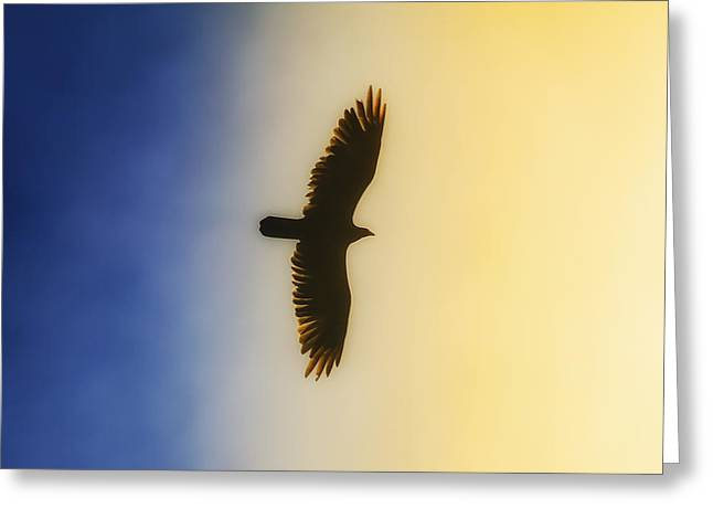 Golden Eagle Over Friday Harbor Greeting Card