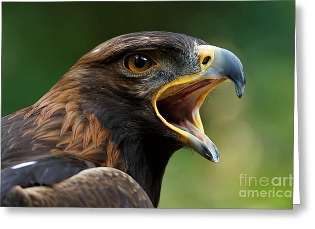Golden Eagle - Raptor Calling Greeting Card