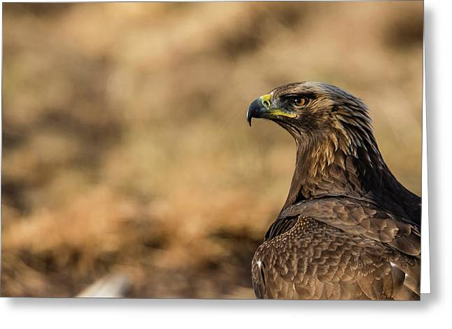 Greeting Card featuring the photograph Golden Eagle by Torbjorn Swenelius