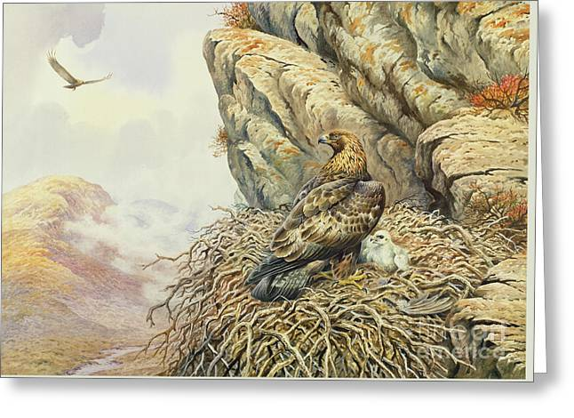 Golden Eagles At Eyrie Greeting Card