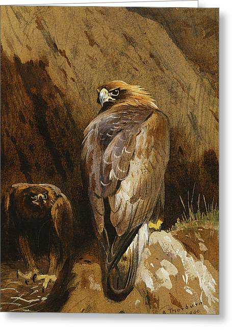 Golden Eagles At Their Eyrie Greeting Card