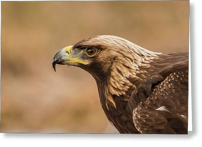 Greeting Card featuring the photograph Golden Eagle's Portrait by Torbjorn Swenelius