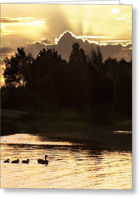 Golden Evening Greeting Card by Angel  Tarantella