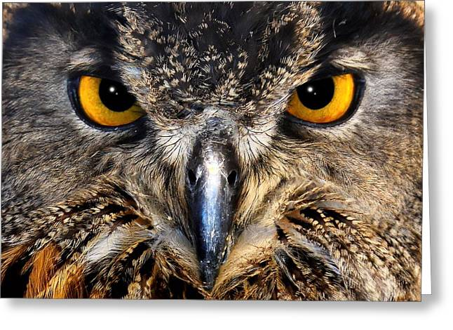 Golden Eyes - Great Horned Owl Greeting Card