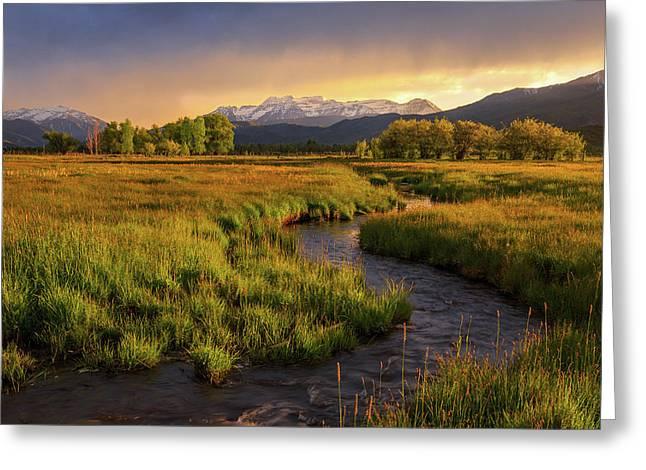 Golden Field In Heber Valley. Greeting Card