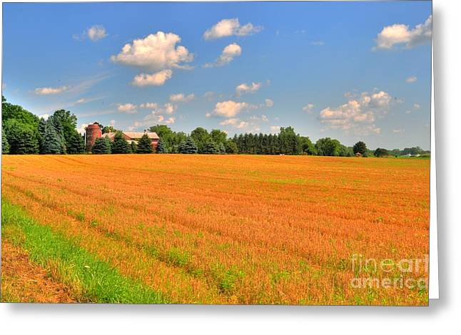 Golden  Field Greeting Card by Kathleen Struckle
