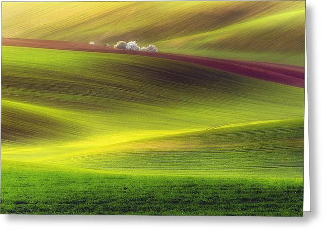 Golden Fields Greeting Card by Piotr Krol (bax)